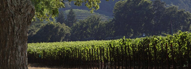 California's Grand Cru Vineyards Emerge