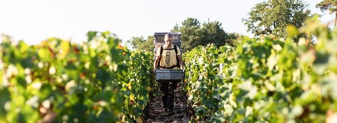 Picking Winners from 2020 Bordeaux