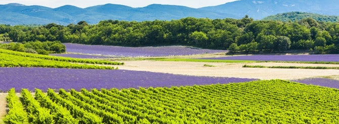 Provence Rosé: Quality, Cash and Celebrity