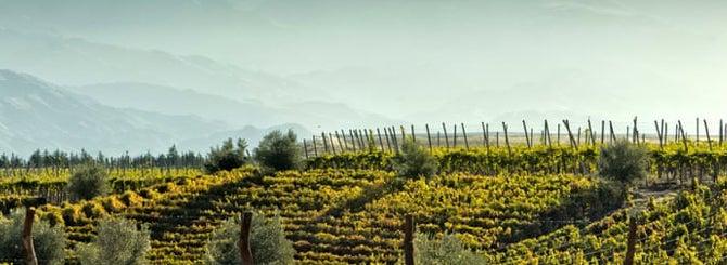 "Chile Gets ""Mega"" Wine Cooperative"