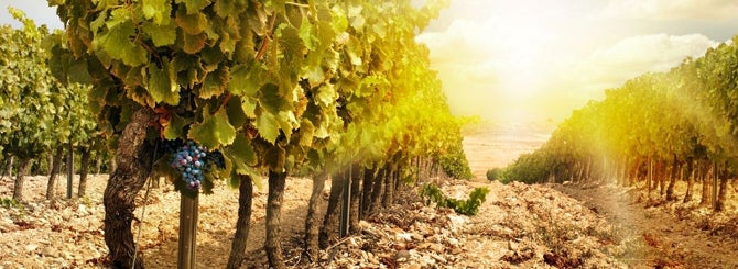 Taking a New Look at Old Vines