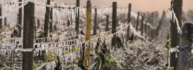 Get Ready for the Global Wine Drought