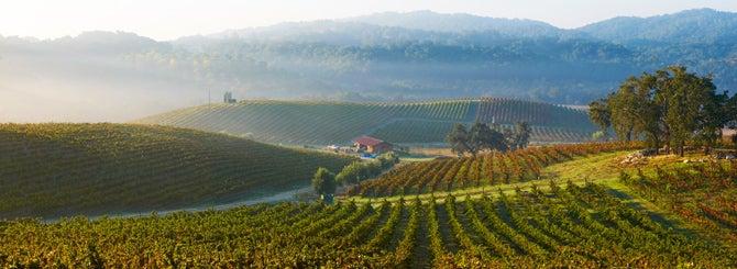 California Harvests Raise Optimism Levels
