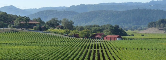 The World's Most Wanted Napa Wines