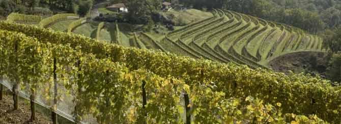 De wijngaarden van de Loire markeerden het begin van de epiphany van Styles.
