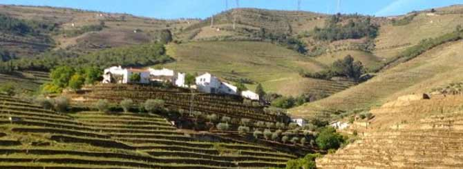 Terraced vineyards in Portugal's Douro wine region
