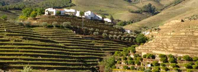 Terraced vinyards in Portugal's Douro wine region