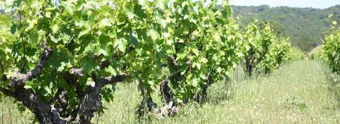 Wine Industry Split Over Natural Wine Wine Searcher News