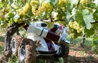 "Seasonal workers pick grapes in Champagne; a ""Clever Robots for Crops"" technician (C) carries out tests on a manipulator"