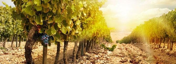 Viñas Viejas Wine-Searcher