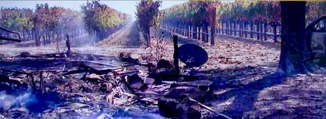 A house lies in ruins in Sonoma County, while the vineyard behind it stands untouched.