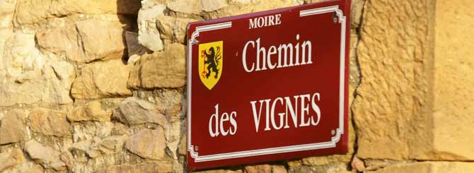 Beaujolais Blanc Steps into the Light | Wine-Searcher News & Features