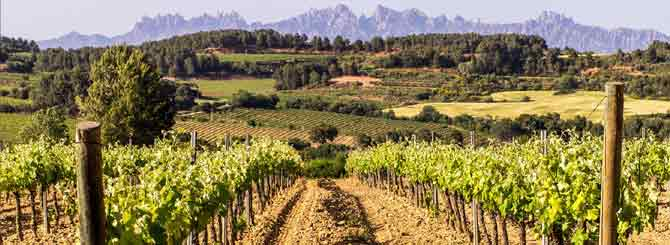 Spanish growers are facing catastrophe, as wineries cut production.