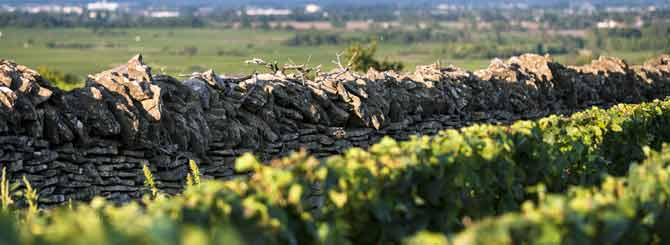 The Rise of Burgundy's Other White Wine | Wine-Searcher News & Features