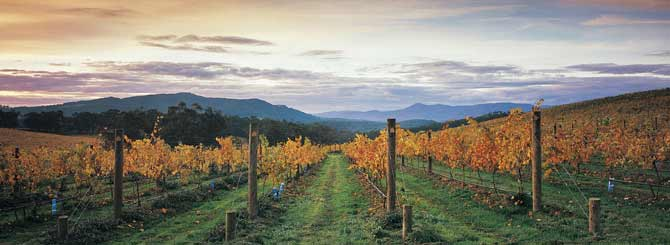 Victoria's Yarra Valley offers both opportunity and challenge to winemakers.