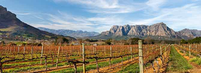 The Final Insult for South African Wine | Wine-Searcher News & Features