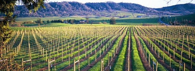 The diverse soils of the Umpqua and Rogue Valleys offer a happy home for Malbec.