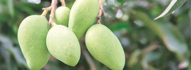 Why discuss gooseberry flavors with someone whose frame of reference is more about green mangoes?