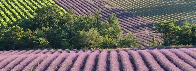 Provence is on the itinerary for big-name producers cashing in on the rosé boom.