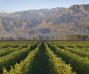 Terrazas De Los Andes Winery Information Page