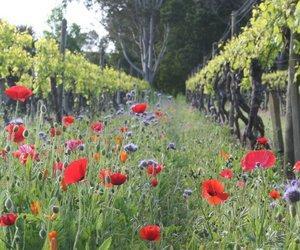 Ata Rangi - Winery Information Page