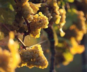 retail prices new product sale usa online Weingut Dr. von Bassermann-Jordan - Winery Information Page