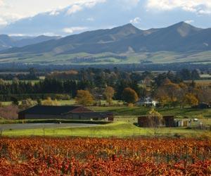 New Zealand North Island Wine Appellations