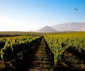 Central Coast Wine Regions