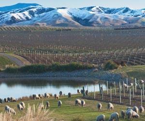 New Zealand Wine Growing Regions Map.New Zealand Wine Regions