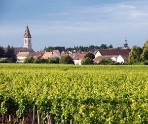 Nuits Saint Georges Wine Regions