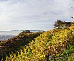 Prosecco Wine Regions