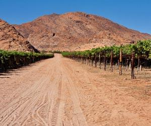 Salta Wine Regions