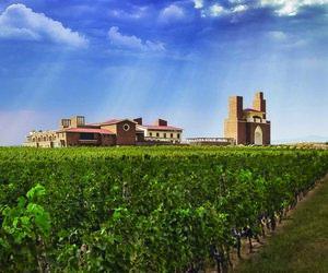 shandong wine region